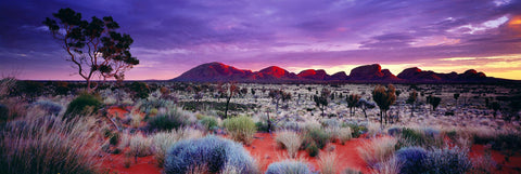 Multi color sunrise in the brush filled desert with the stone formation of Kata Tjuta National Park Australia in the background