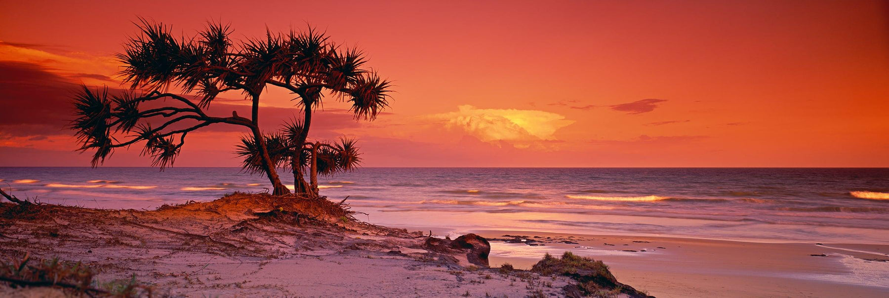 Pandanus tree in the foreground of the sand dune beach of Fraser Island Australia at sunrise