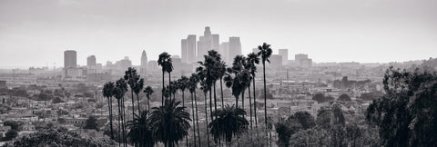 Black and white view of downtown Los Angeles California from a hillside lined with palm trees