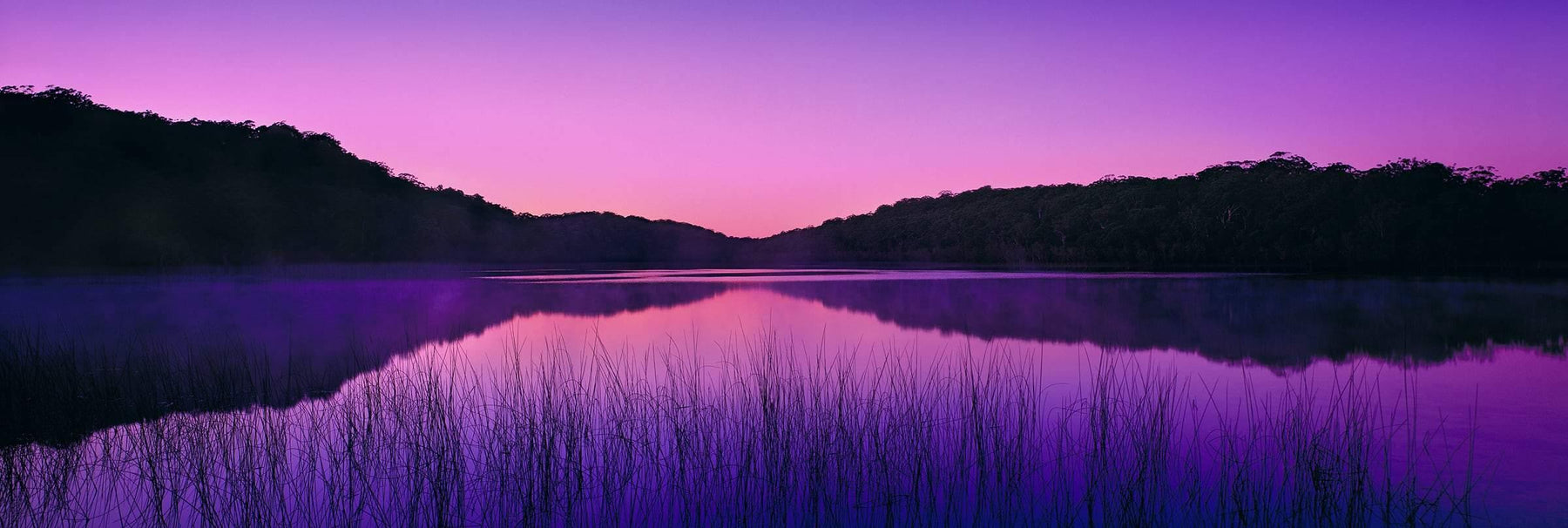 Reeds in the foreground of Lake McKenzie Australia surrounded by brush covered hills during a pink and purple sunrise