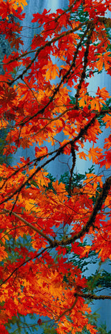 Branches with red and orange maple leaves hanging in front of a blue waterfall