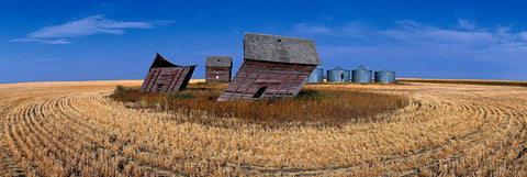 Abandoned windblown old barns and silos in a cut wheat field in Saskatchewan Canada