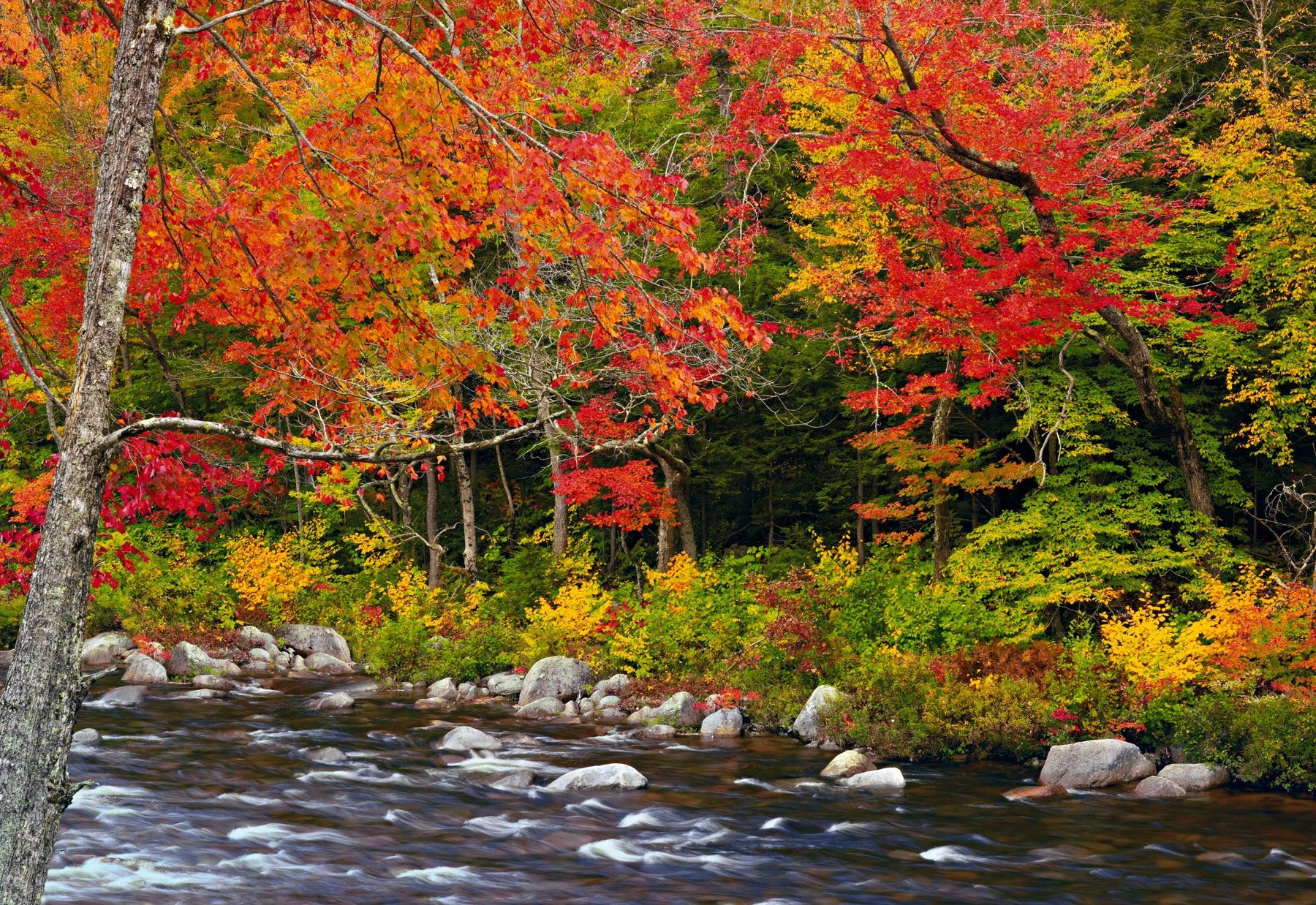 River running over rocks in the middle of an Autumn colored forest in White Mountain National Forest New Hampshire