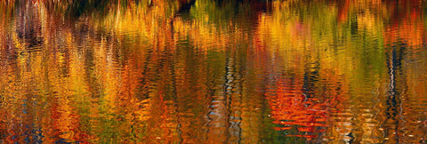Close up of reflections of the Autumn colored trees on a pond in Central Park New York