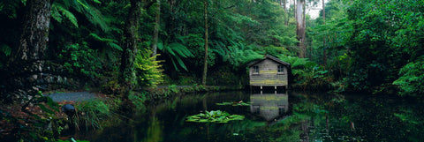 House on a pond in a tropical rainforest in Dandenong Mountain Ranges of Australia