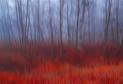 Blurred forest of brown trees surrounded by a field of red grass