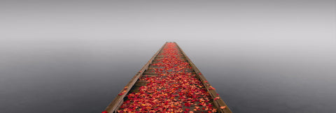 Wooden jetty covered with Autumn leaves reaching out over a misty lake in Seattle Washington