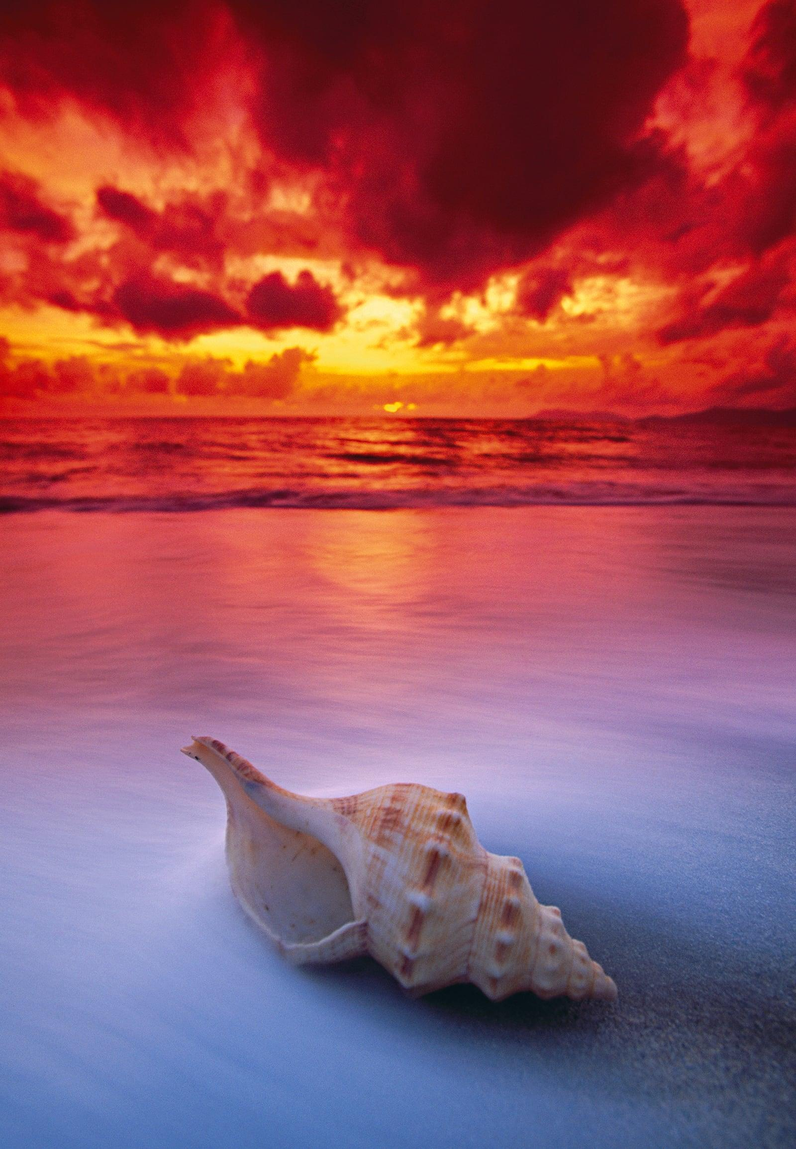 Conch shell on Holloways Beach, Australia during under the red cloudy sky at sunset