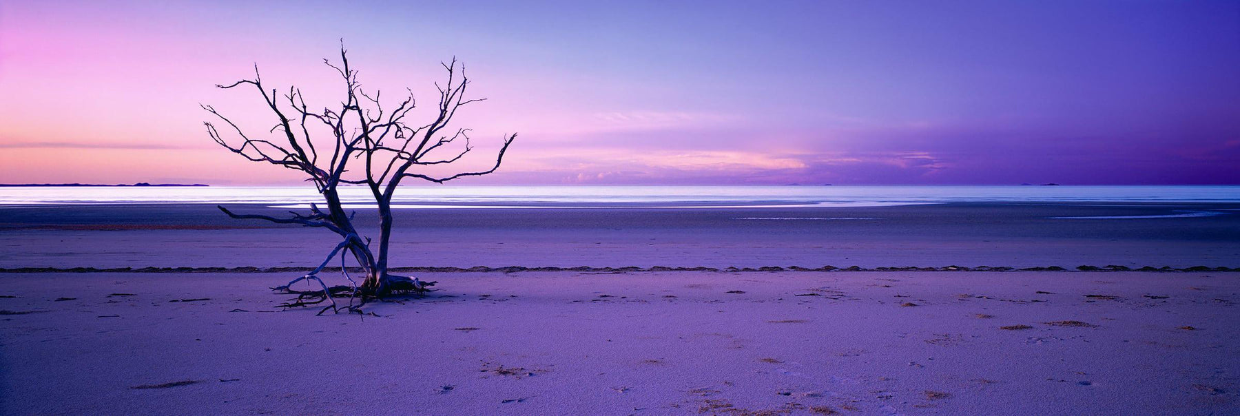 Lone tree on the long flat beach at Cape York Australia during the sunset