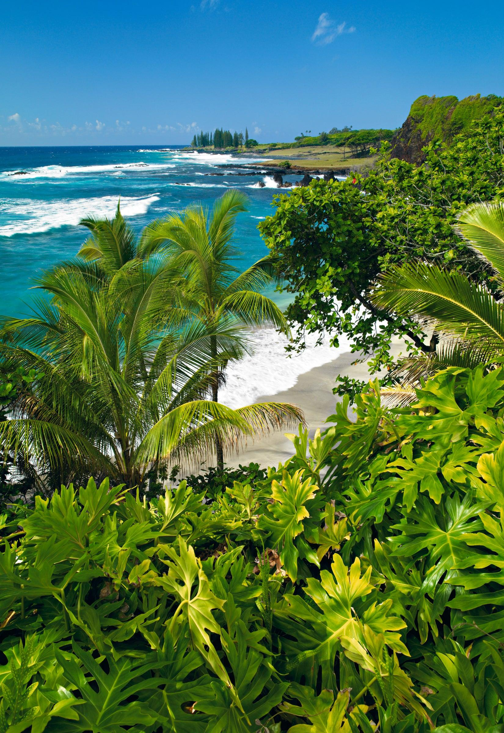 Looking over tropical foliage and palm trees down to Hamoa beach and coastline of Maui Hawaii
