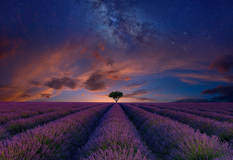 Single tree in the middle of rows of purple lavender under a cloudy sky filled with stars and the milky way