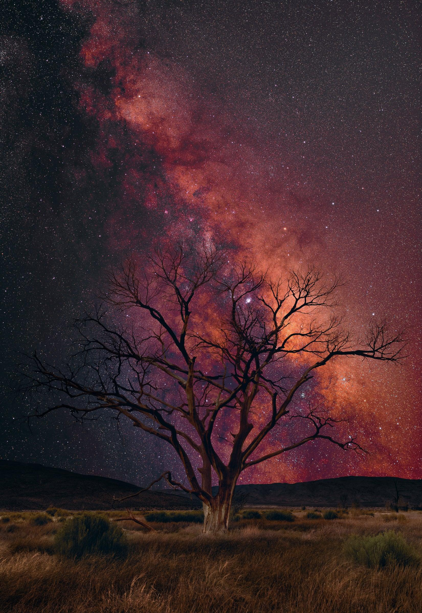 Leafless old tree in a yellow grass field under a sky filled with stars and the milky way