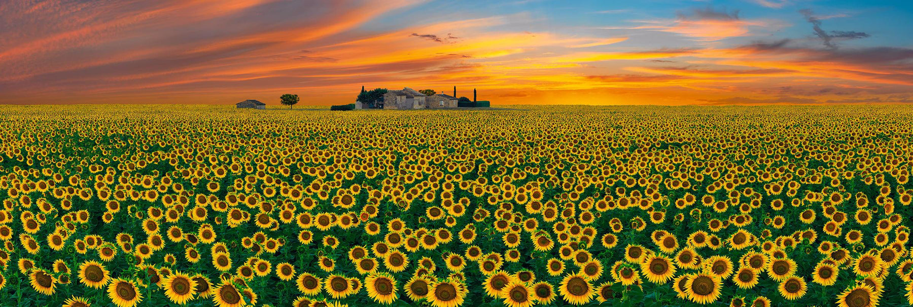 House in the middle of a sunflower field in France at sunset