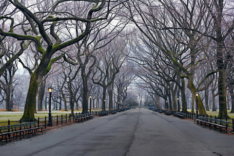 Bench lined path leading through the leafless trees in Central Park New York