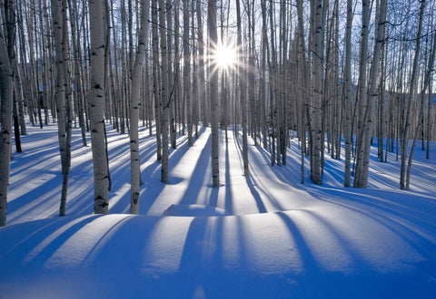 Sun shining through a snow covered forest of birch trees in Telluride Colorado