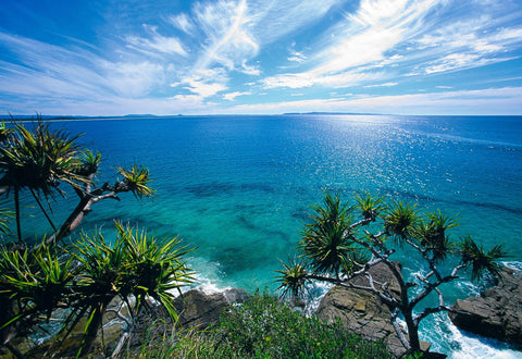Pandanus trees from the top of a rocky cliff overlooking the aquamarine ocean of the Sunshine Coast Australia