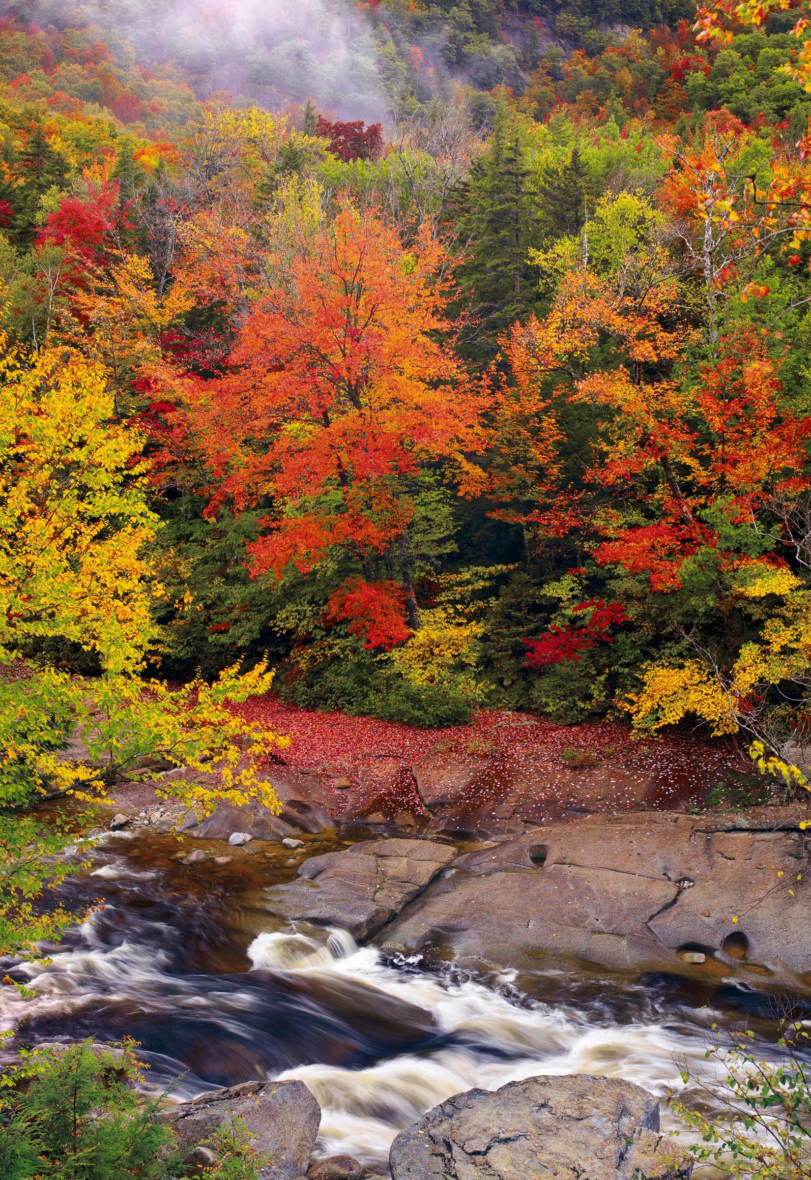 River running through the middle of a misty Autumn colored forest in White Mountain National Forest New Hampshire