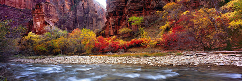 Water running over a river bed surrounded by Autumn colored trees at the canyon base of Zion National Park Utah