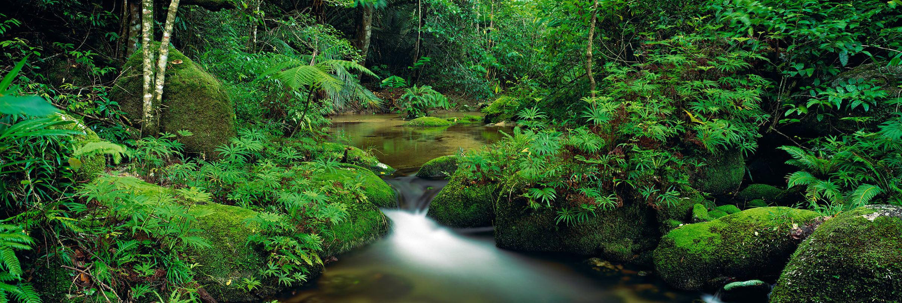 Creek with mossy boulders running through the tropical rainforest of Daintree National Park Australia