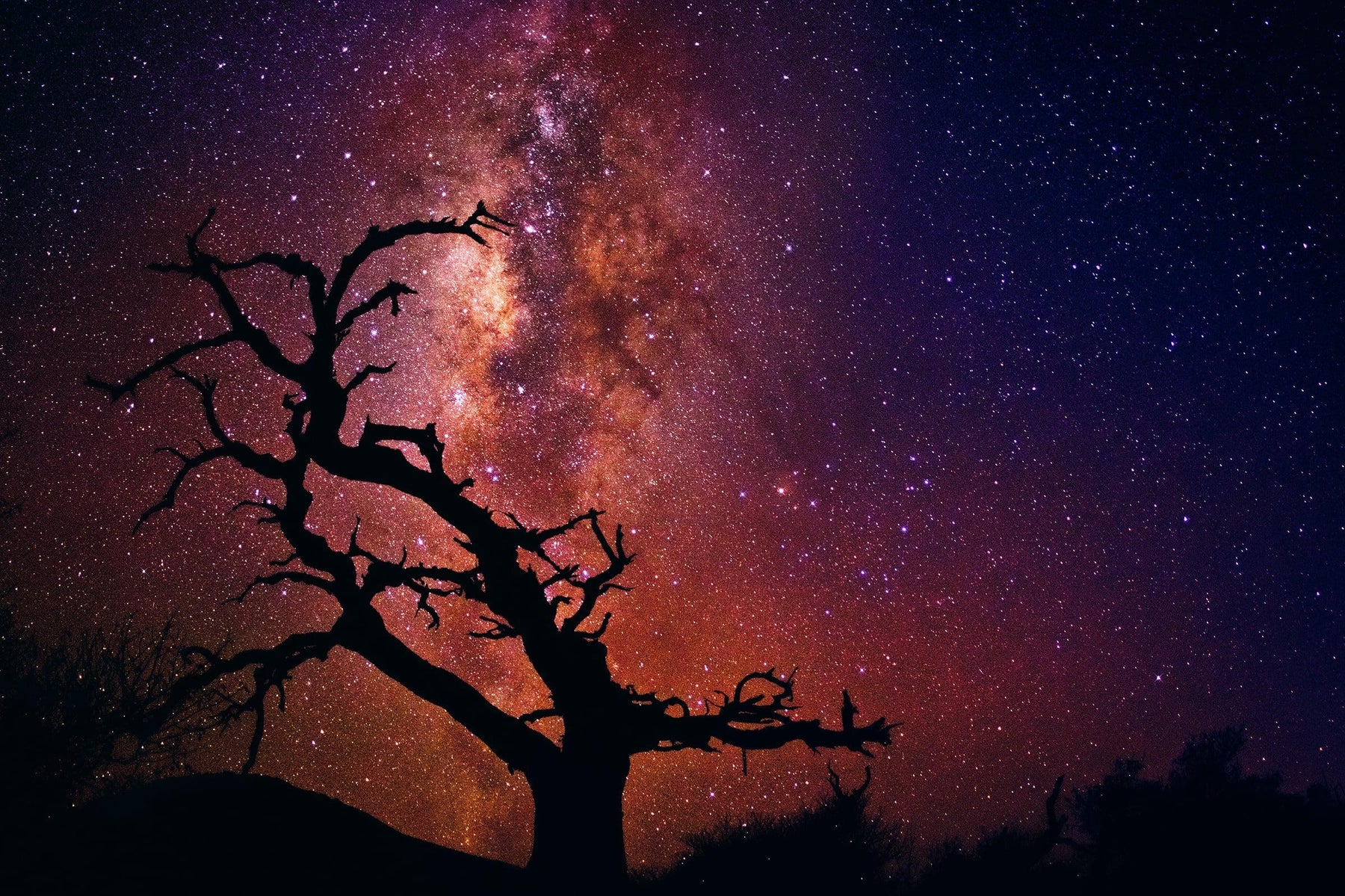 Silhouette of a leafless tree on the mountainside of Mauna Kea Hawaii below a sky filled with stars and the Milky Way