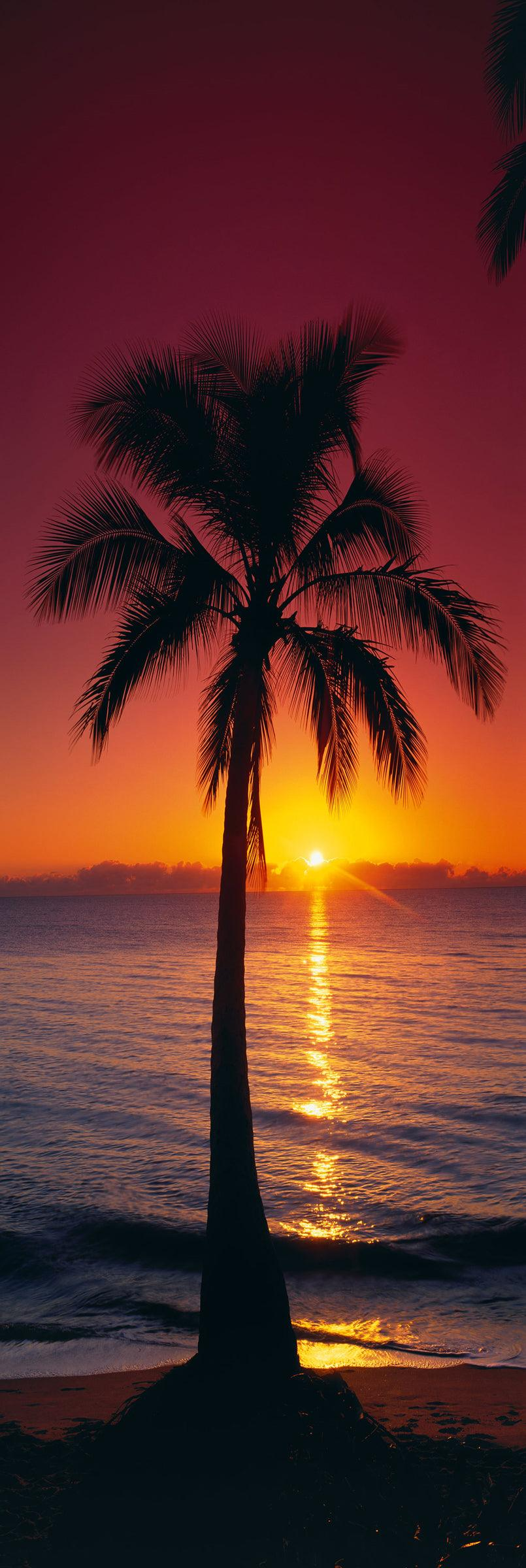 Palm tree on a Cairns beach silhouetted against the sun rising from the low clouds on the ocean horizon