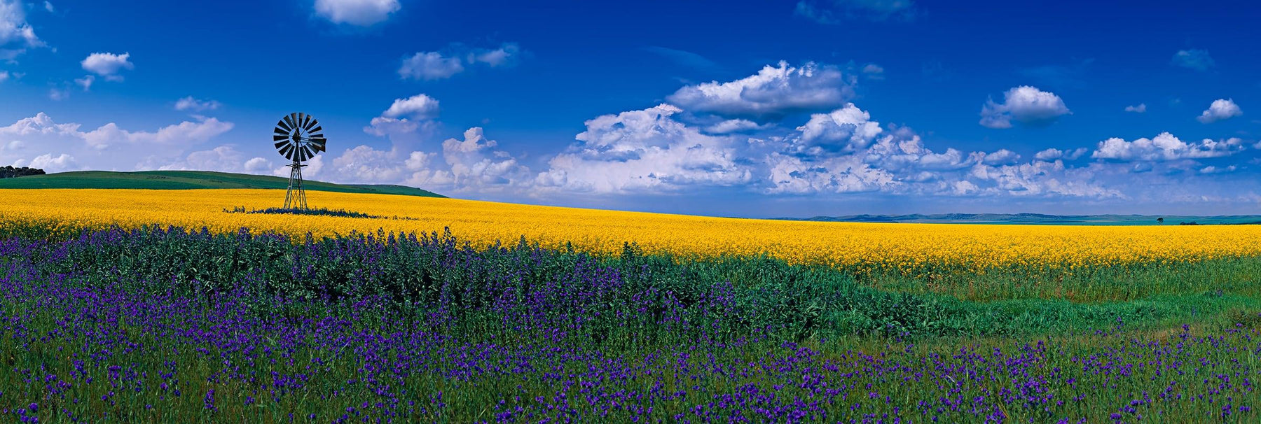 Windmill sitting in the middle of a yellow and purple flower field in Burra Australia