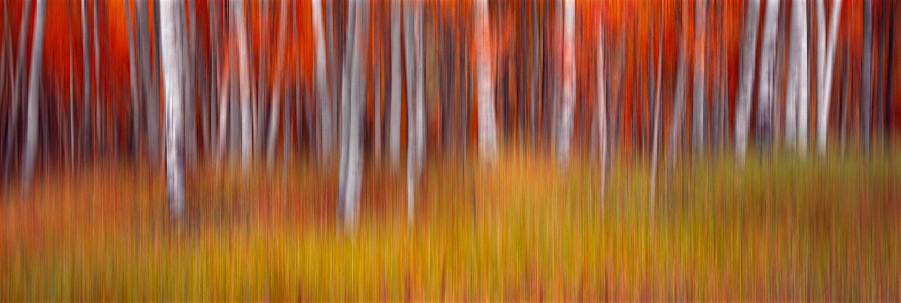Blurred red and white forest with a green and yellow grass foreground in Aspen Colorado