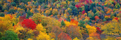Autumn colored forest of Shenandoah National Park Virginia