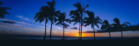 Sun setting behind palm tree silhouettes on Waikiki Beach Hawaii