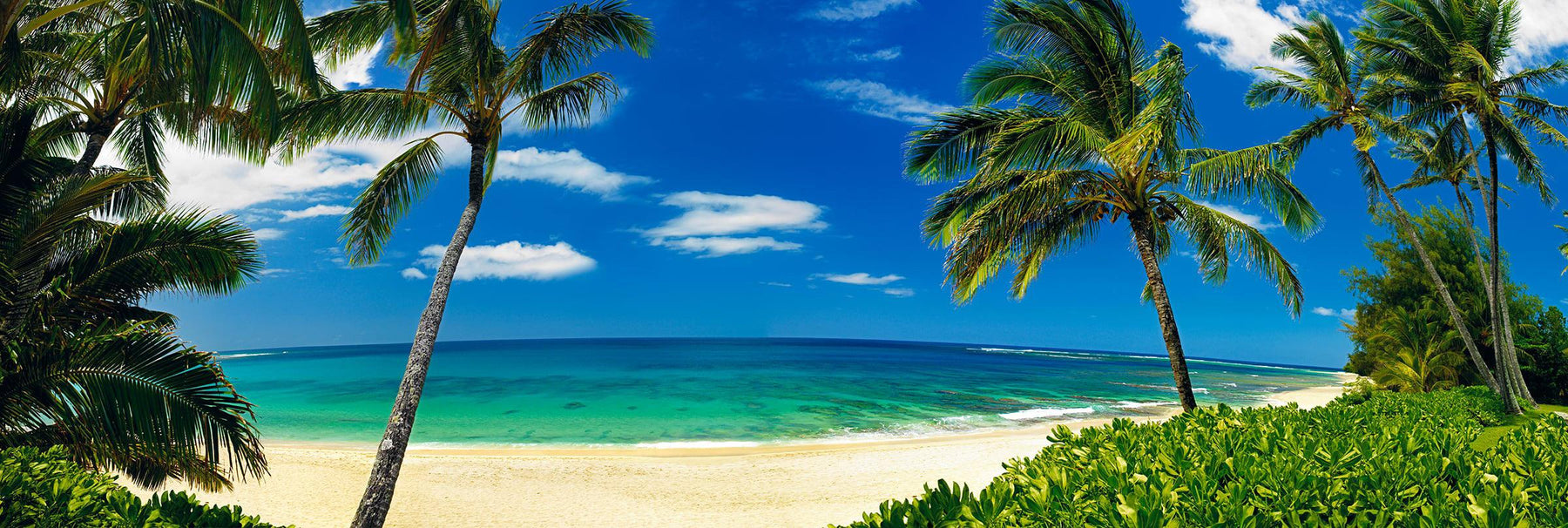 Looking through palm trees and foliage to the ocean and shore of Tunnels Beach Hawaii