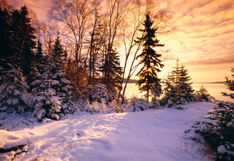 Snow covered pine trees along the shores of Lake Superior Wisconsin