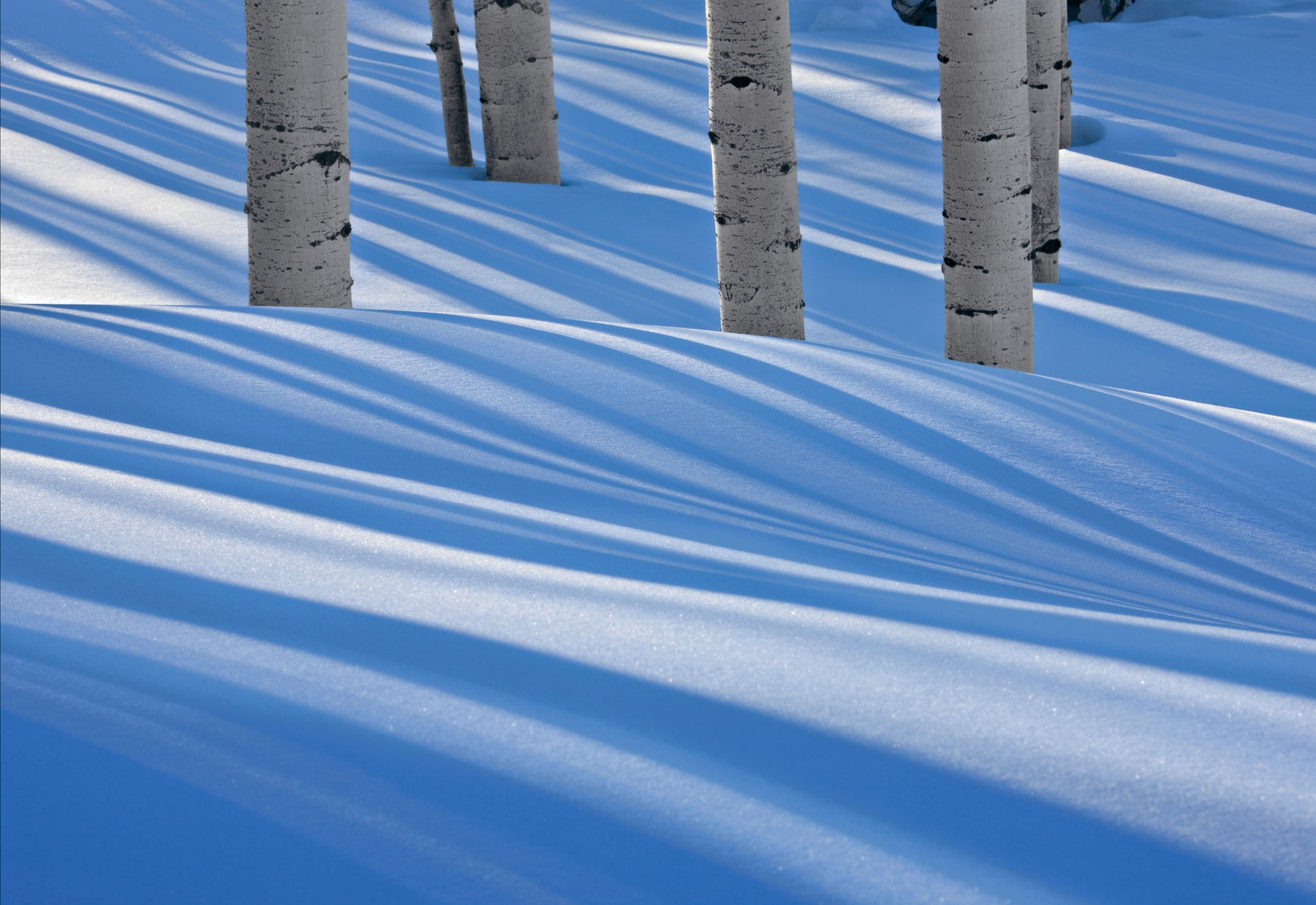 Close up of birches casting their shadows on the snow mounds in Telluride Colorado
