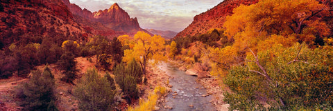Virgin River running through tree filled rocky terrain with the mountains of Zion National Park Utah behind
