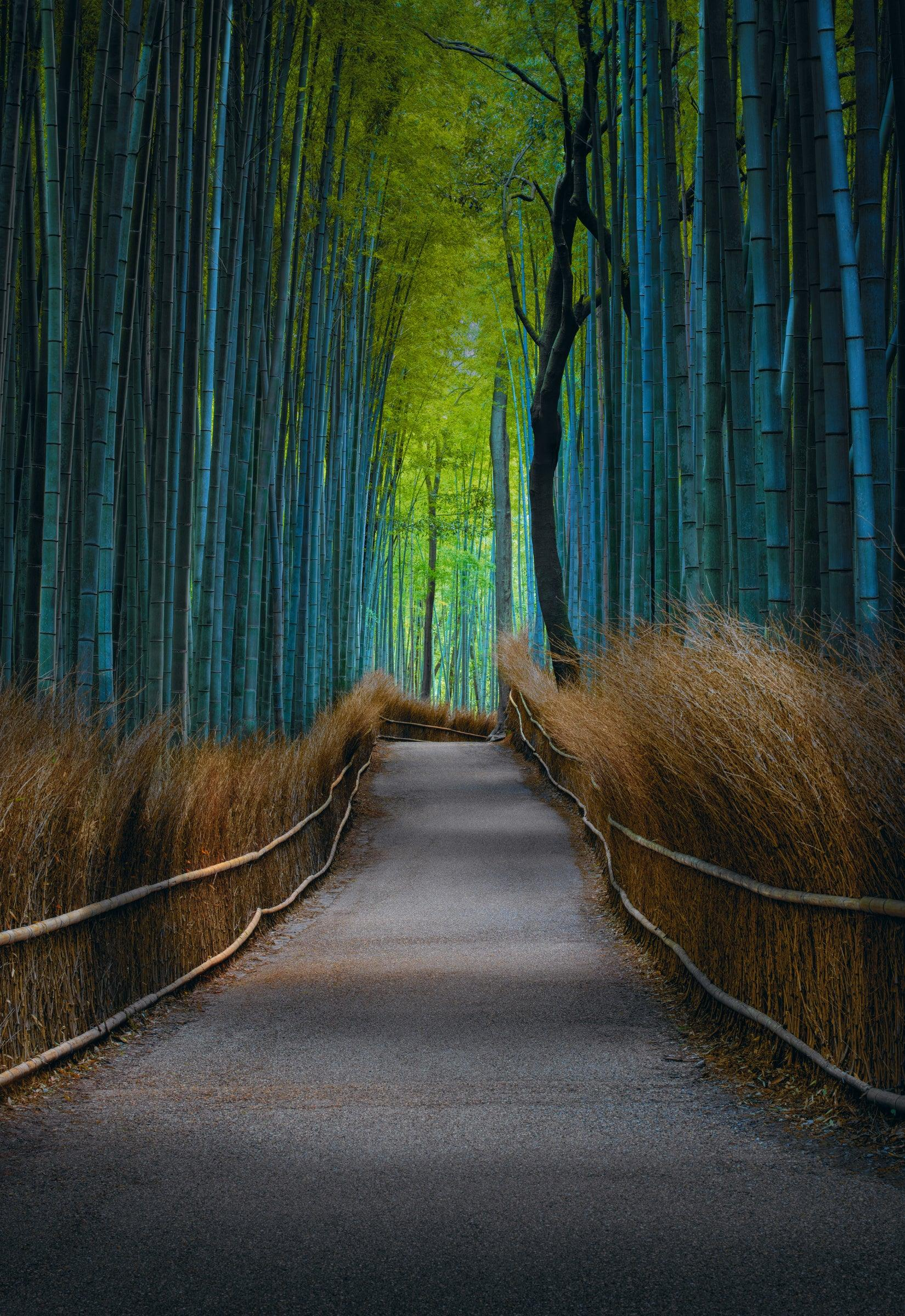 Concrete path with brown grass barriers leading down the middle of a green bamboo forest in Kyoto Japan