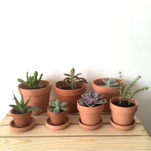 Terracotta Potted Succulents