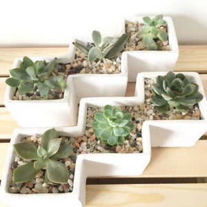 Staircase Succulent Container