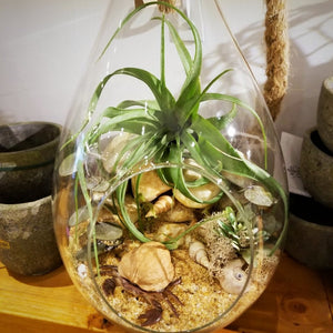 Airplant - Areias
