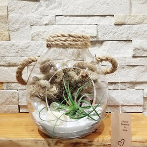 Airplant - Honey Jar