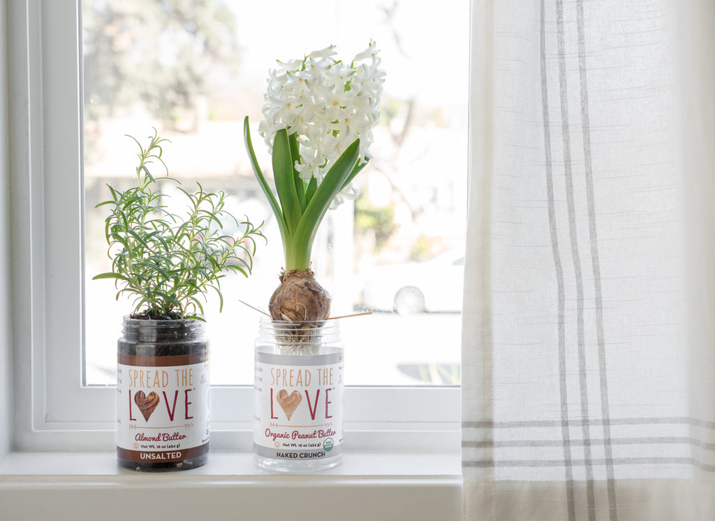 Spread The Love jars used to grow small plants