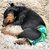 waterproof dog diapers washable