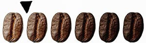 Specialty Coffee beans lined up from light to dark roast also has arrow pointing on the lighter side