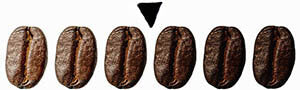 Specialty coffee bans from light to dark with arrow on medium roast