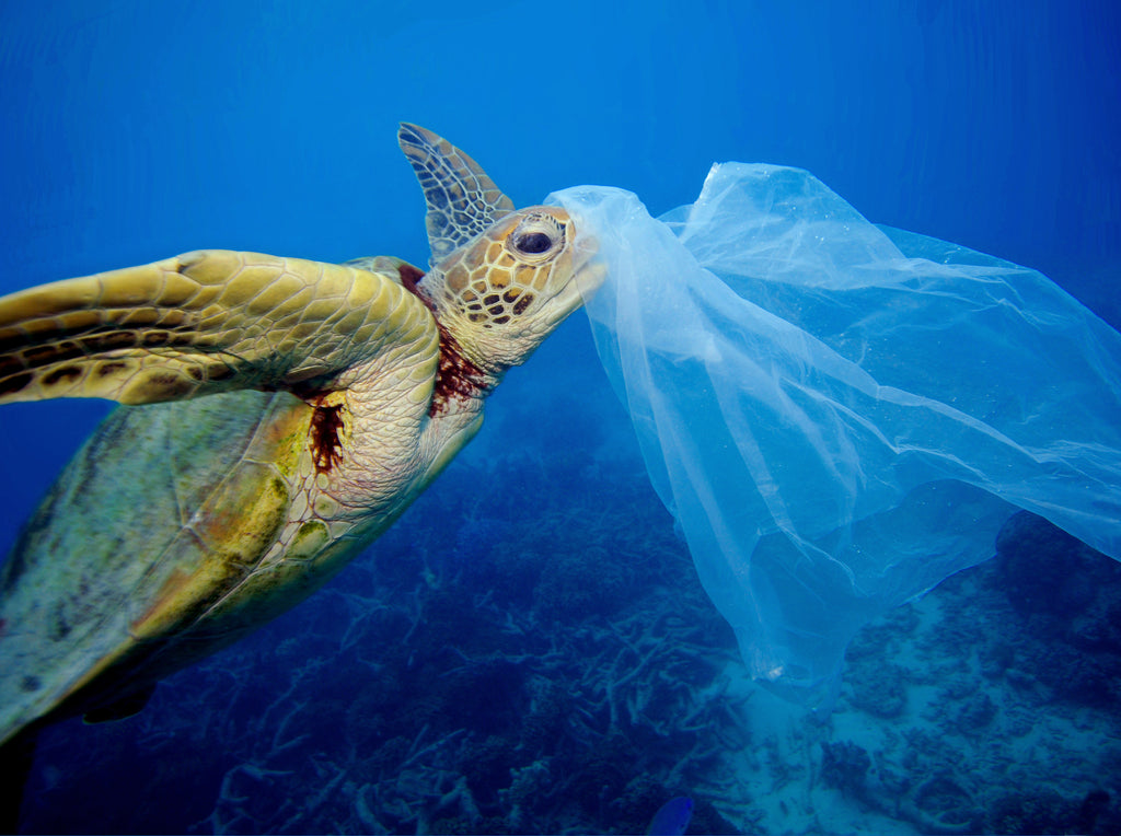 Plastic pollution, plastics in the ocean, marine debris, ocean pollution, marine pollution, plastic ocean, ocean cleanup, garbage in the ocean, trash in the ocean, environmental news, eco friendly, go green, plastic waste, green movement, green living