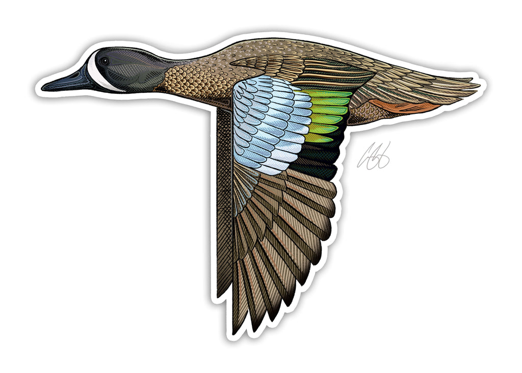 Blue Winged Teal Decal