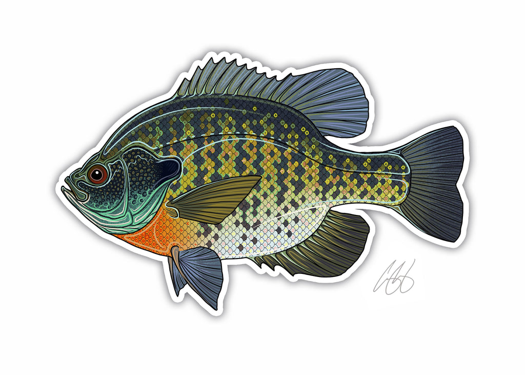 Bluegill Decal