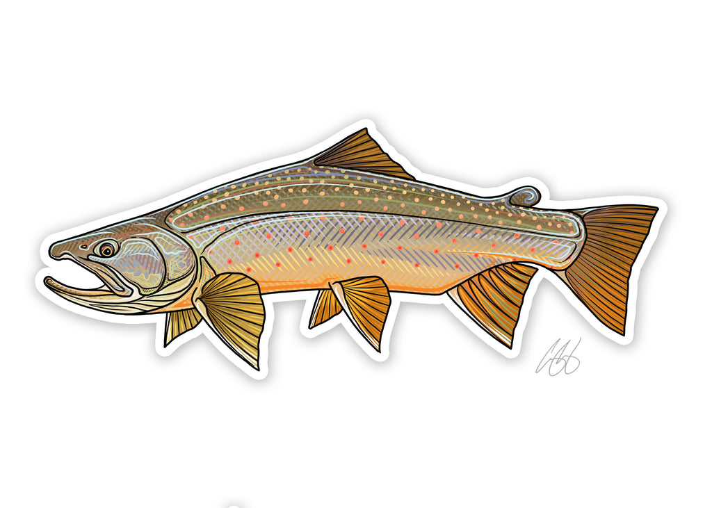 Bull Trout Decal