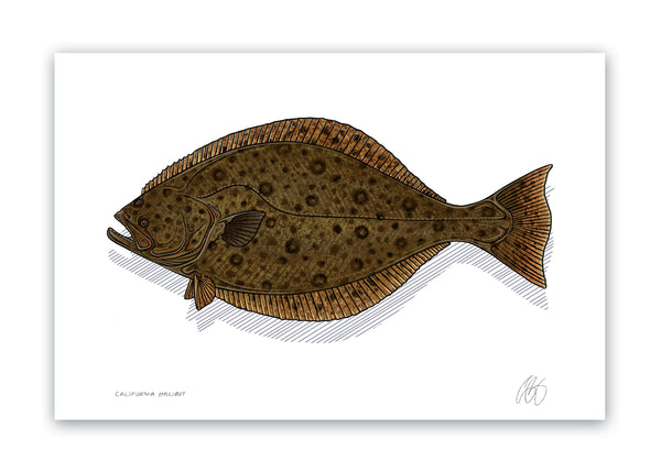 California Halibut Print
