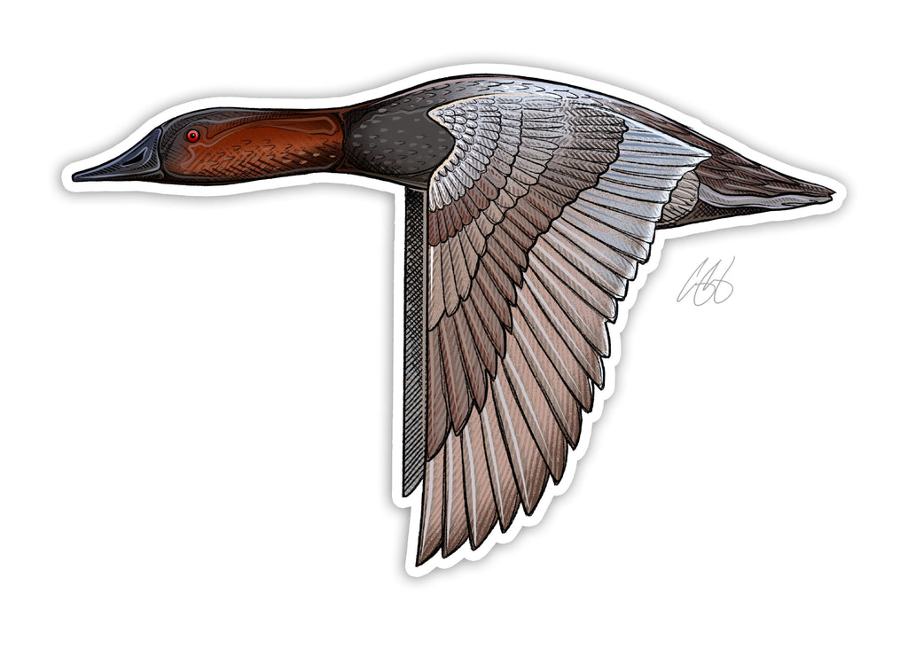 Canvasback Decal