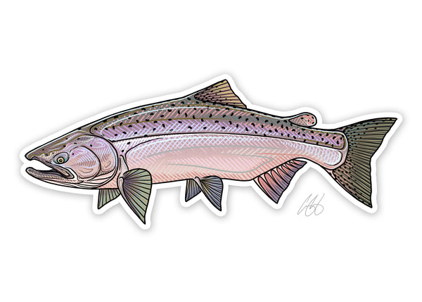 Chinook Salmon Decal