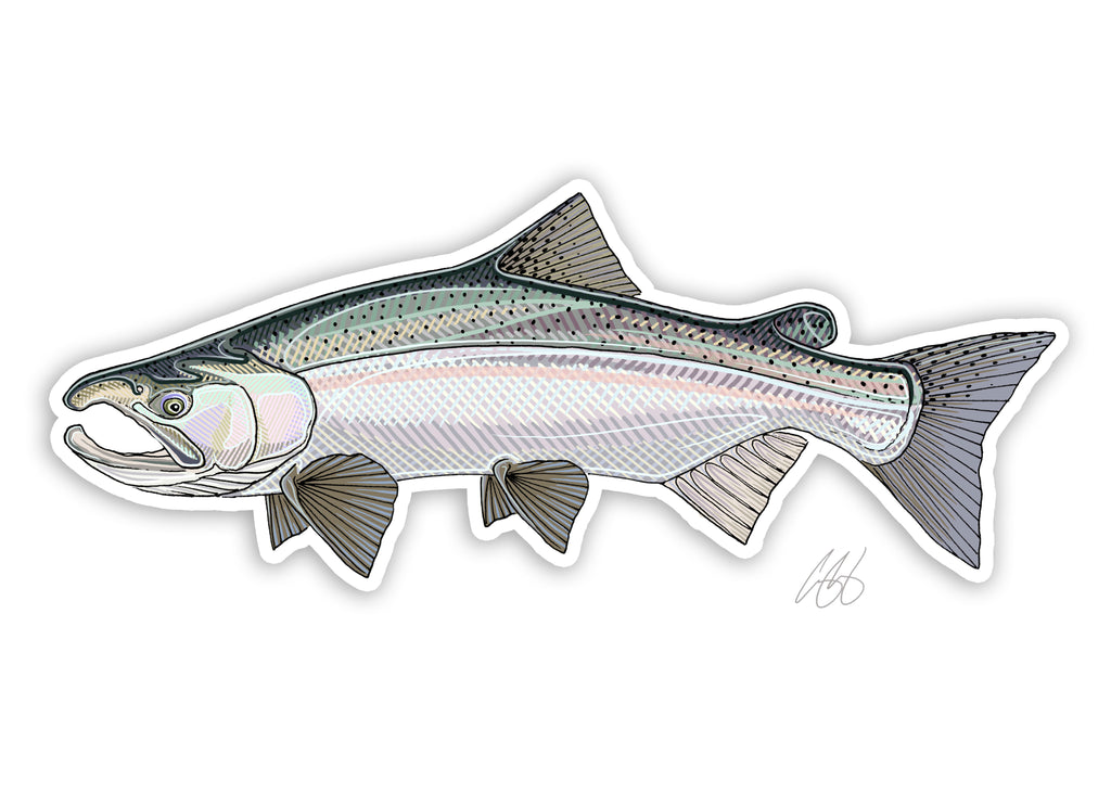 Coho Salmon Decal